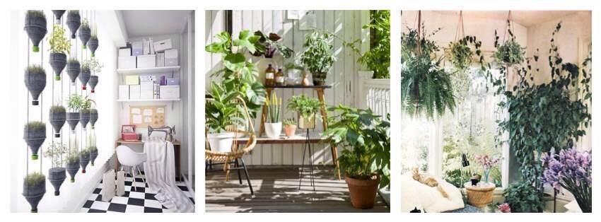 Озеленение в квартирах