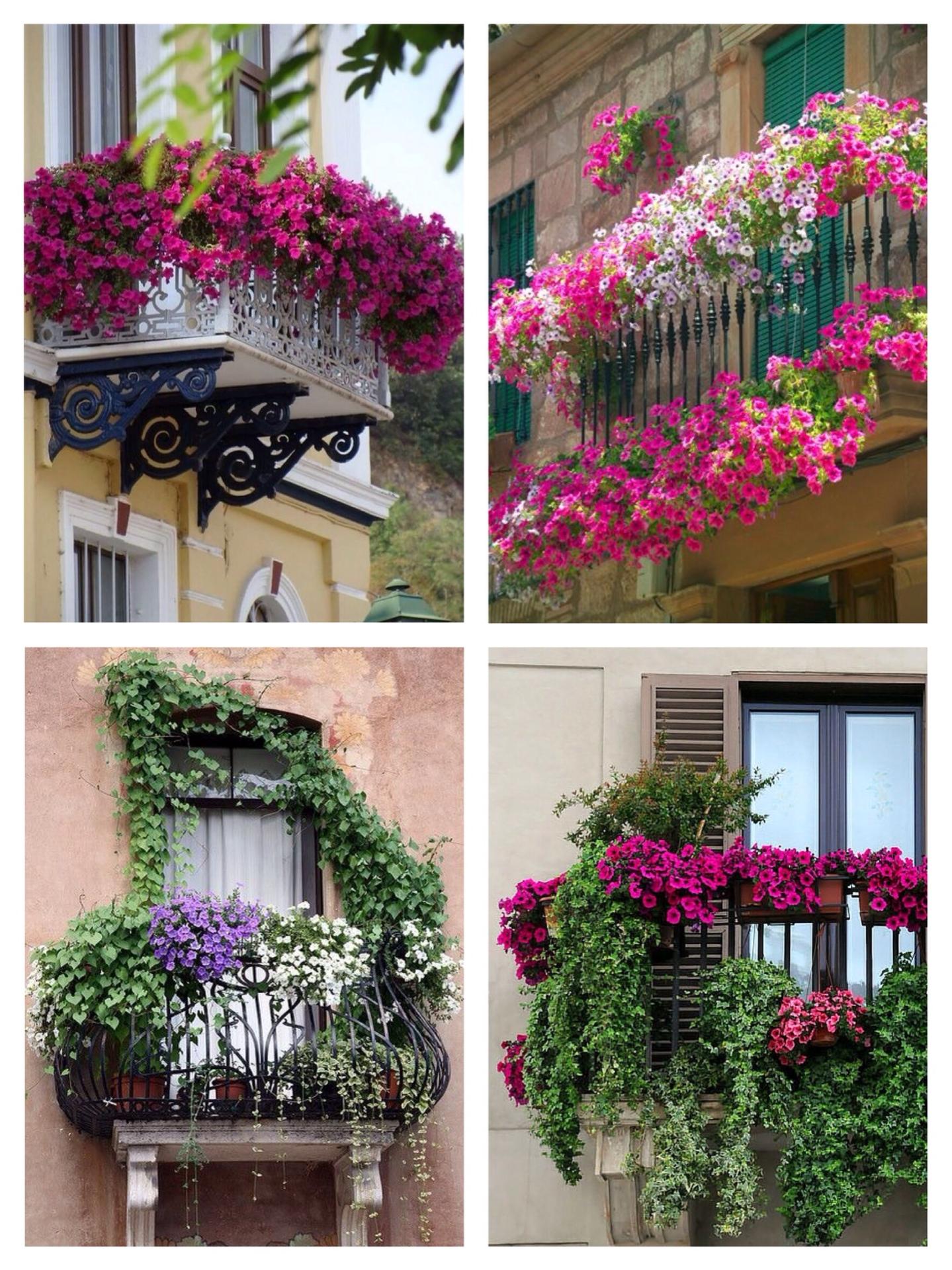 Какие цветы посадить на балконе и лоджии: фото, видео, совет.