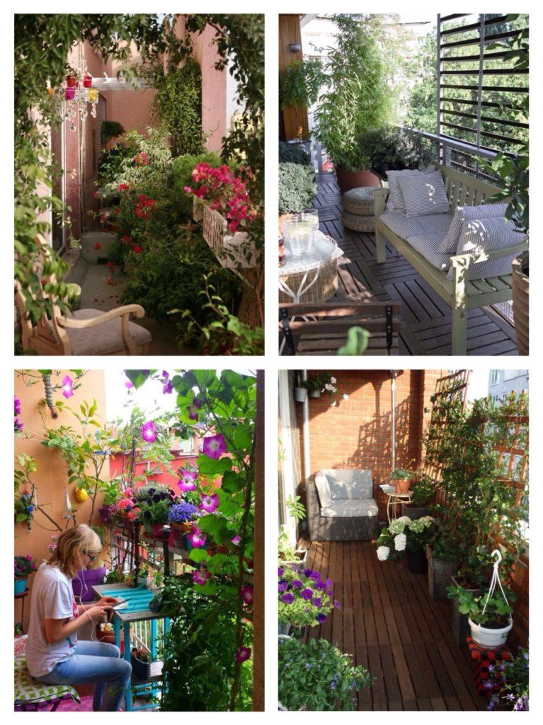 вьющиеся растения и цветы на балконе