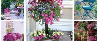 декорирование балкона петунией